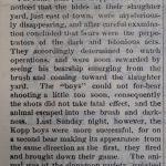 Bear killing near Bozeman - Newspaper found at Gallatin History Museum Bozeman
