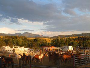 Rodeo in Livingston
