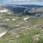 Mountain goats at the Beartooth Highway