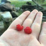 frehs rasberrys