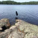 Otis jumping in the water