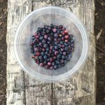 Fresh blueberrys